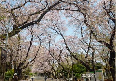 Sakurastreet